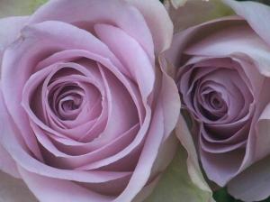 oud-roze-rozen