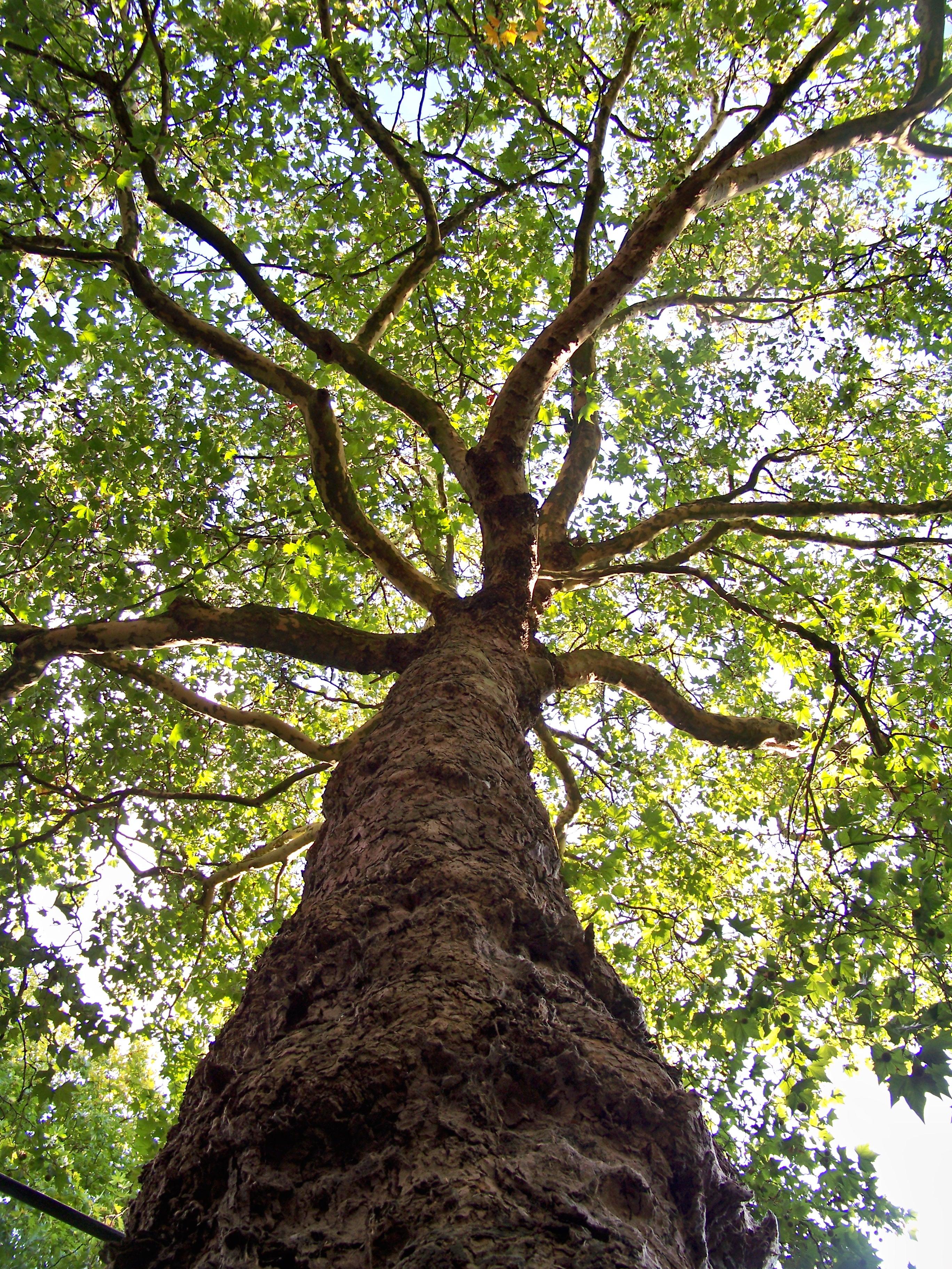 Ik zie mensen het zijn net bomen vrijspraak - Deksel van de boom ...