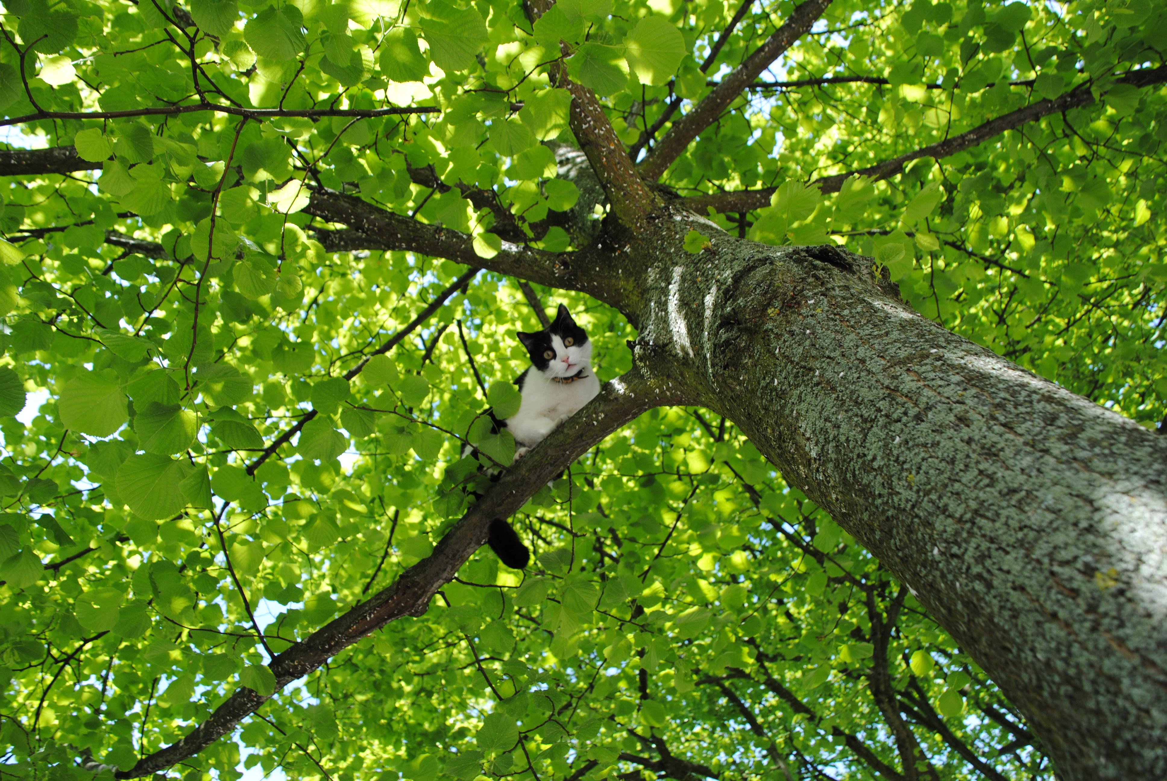 Het blijven jagers vrijspraak - Hoe een boom te verlichten ...