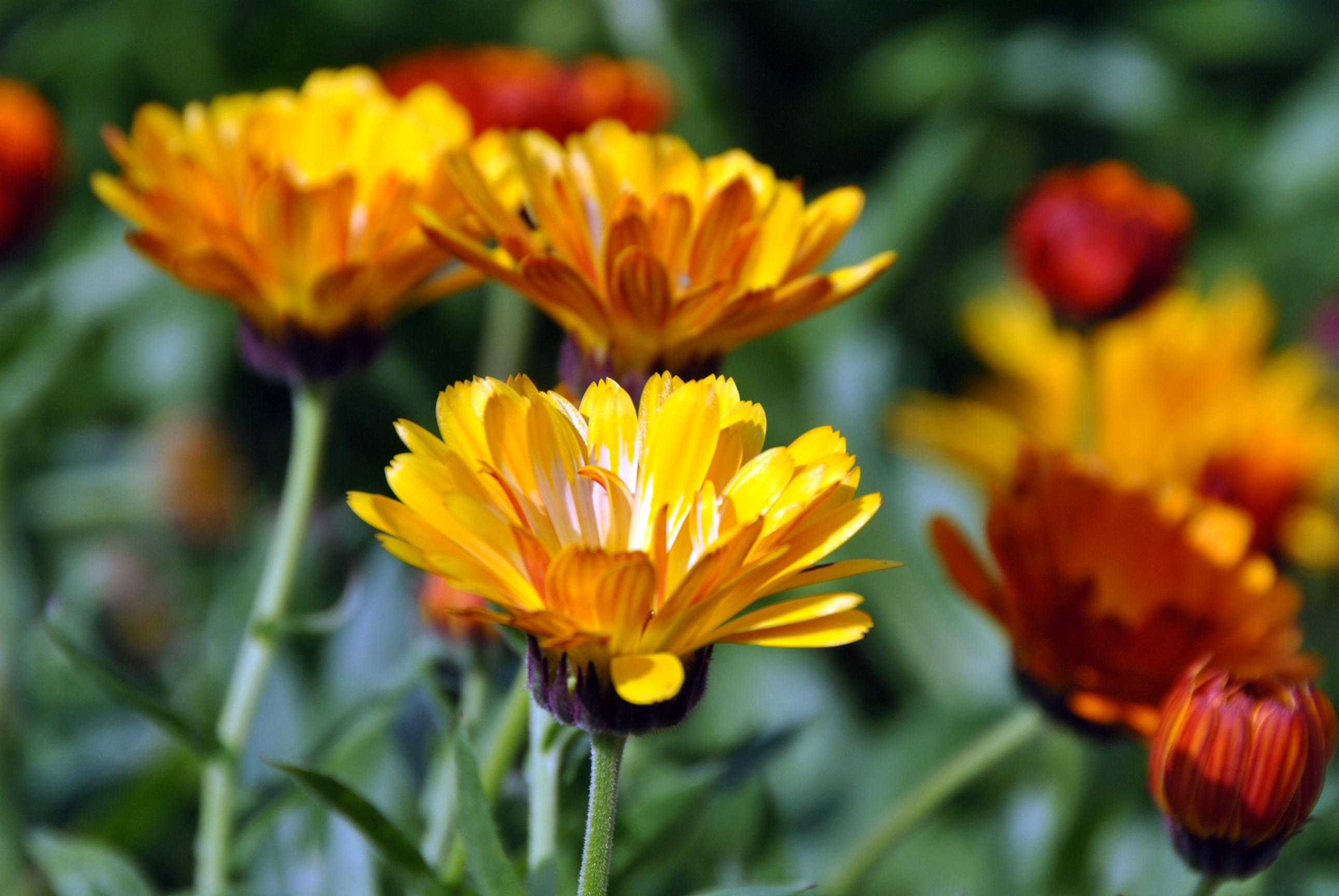 Villa augustus bloementuin vrijspraak for Www bloem en tuin nl