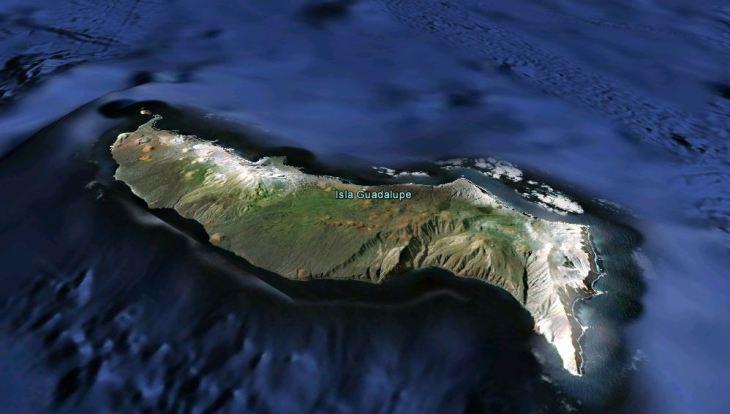 Isla Guadalupe