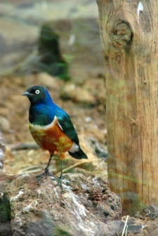 birdDSC_1303